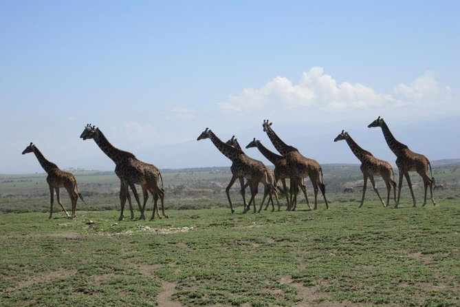 4 Days, 3 Nights Safari, Lake Manyara, Serengeti, Ngorongoro Crater