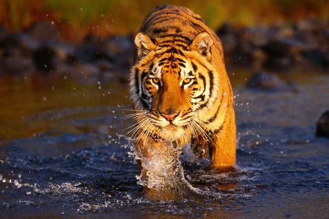 4 Day Bardia Jungle Safari with Tiger Encounter