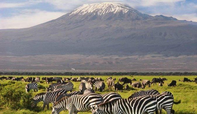 Amboseli Kilimanjaro Top of Africa Safari Adventure