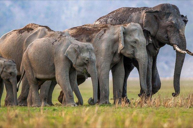 Rajaji National Park Safari tour from Delhi