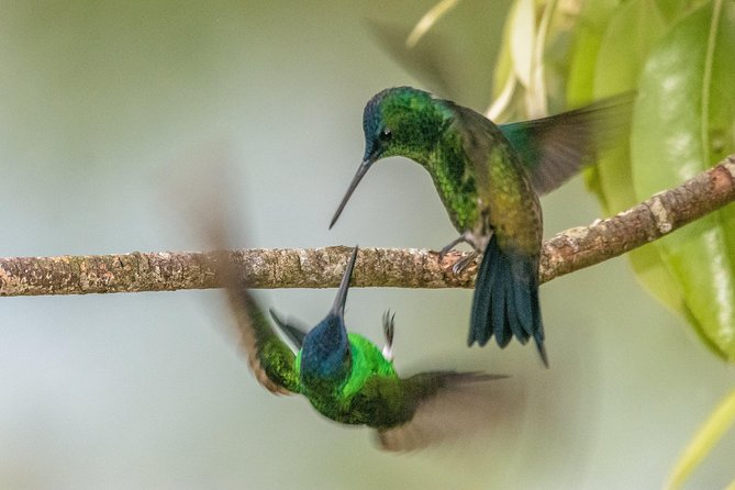 Colombia bird watching experience. 5d/4n