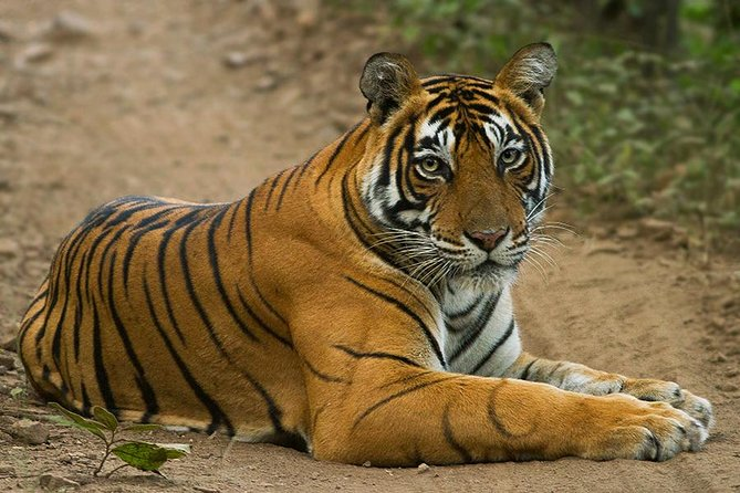 Private 3-Day Ranthambore National Park Tour from Agra (Ending in Delhi)