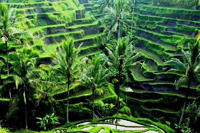 3 Days 2 Nights Fabulous Ubud