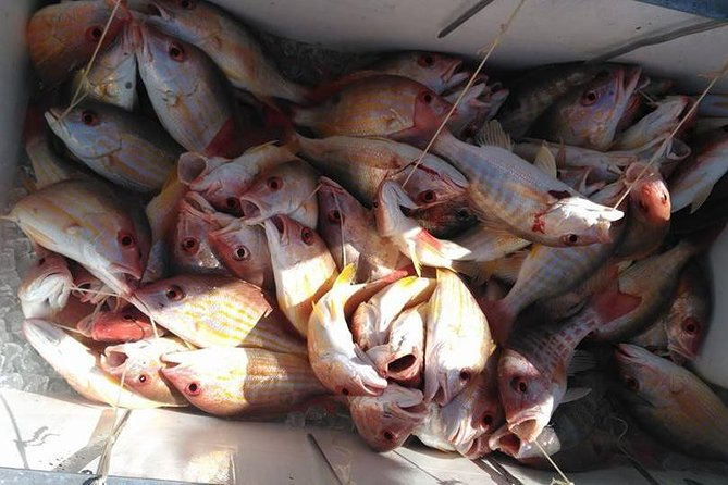 Catch of Lane Snappers