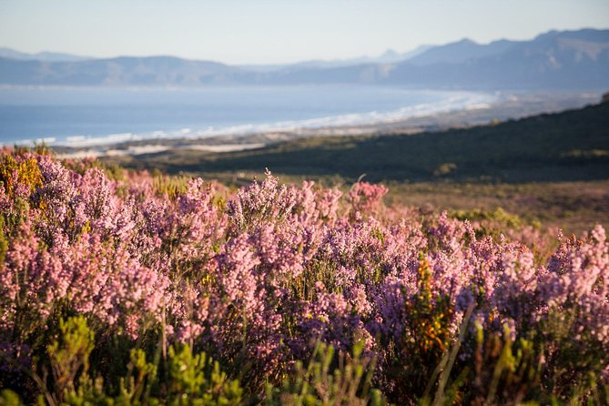 7-day Cape Town, Winelands, Garden Route and Addo National Park