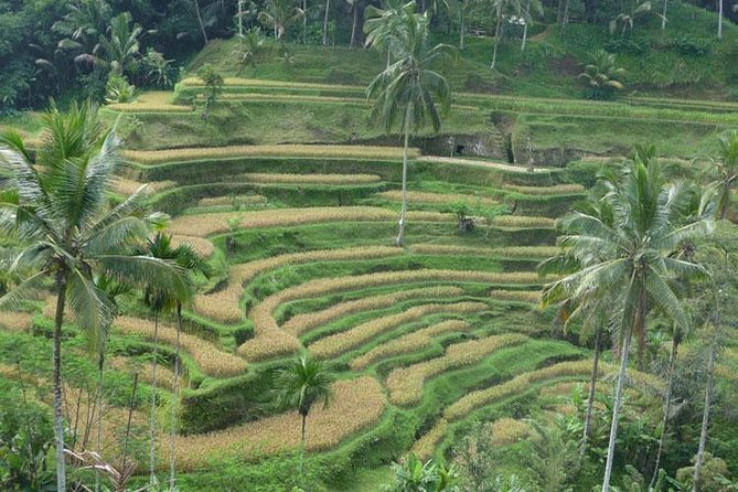 UBUD KINTAMANI TOUR