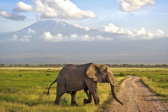 4 Days Animal Kingdom - Mombasa