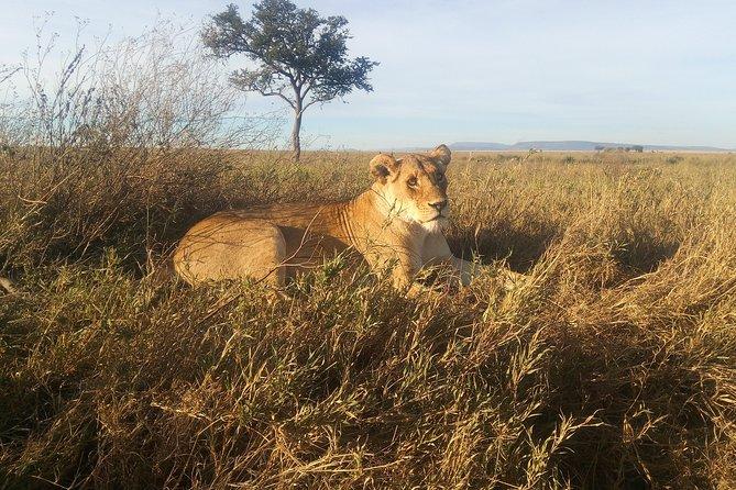 6 Days Safari: Tarangire National Park - Serengeti National Park & Ngorongoro.