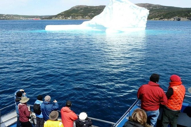 When the currents and winds are right, icebergs can get swept into Bay Bulls Harbour