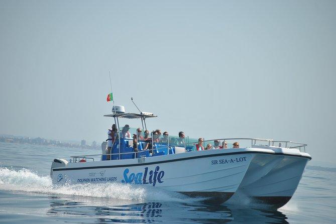 Sealife Dolphin Watching, Lagos Algarve