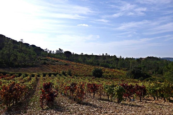Discovering the Prior Lucas vineyards, Coimbra