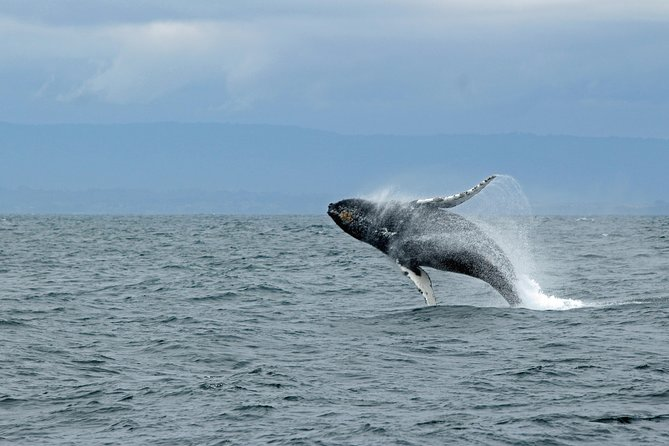 Whale Watching & Wildlife Viewing Excursion photo 1