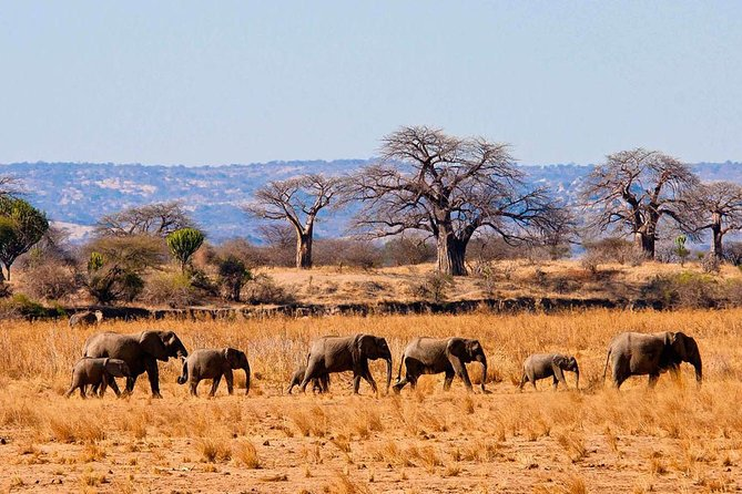8 Days / 7 Nights TANZANIA LODGE SAFARI – Wildlife Trails and Treks