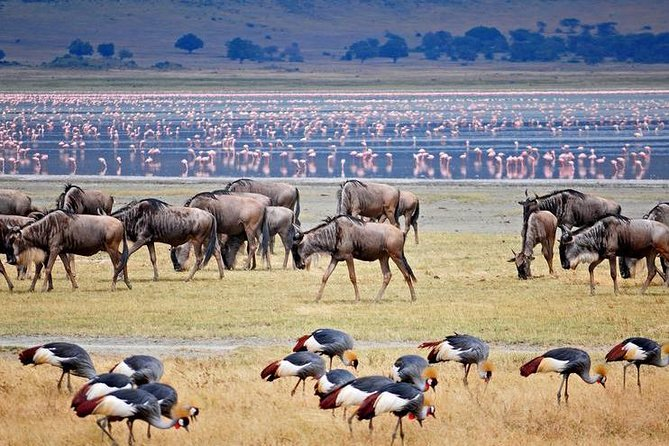 1 Day Joined Group Safari in Lake Manyara