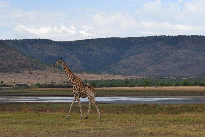 Pilanesberg National Park Full-Day Tour from Johannesburg