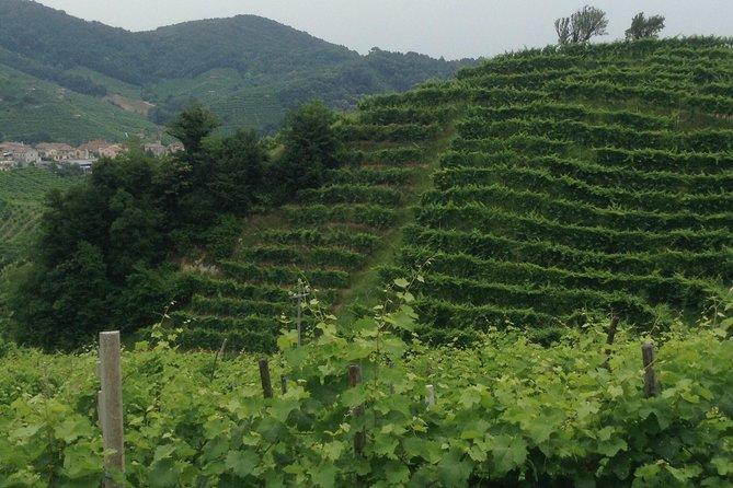 Prosecco Wine Tour With Tiramisu' From Venice