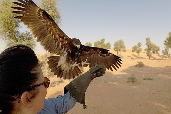 Afternoon Dubai Falconry Safari