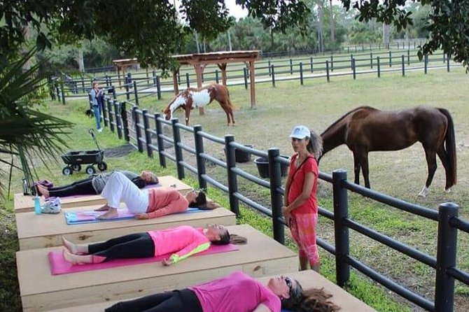 Meditate with horses at a farm