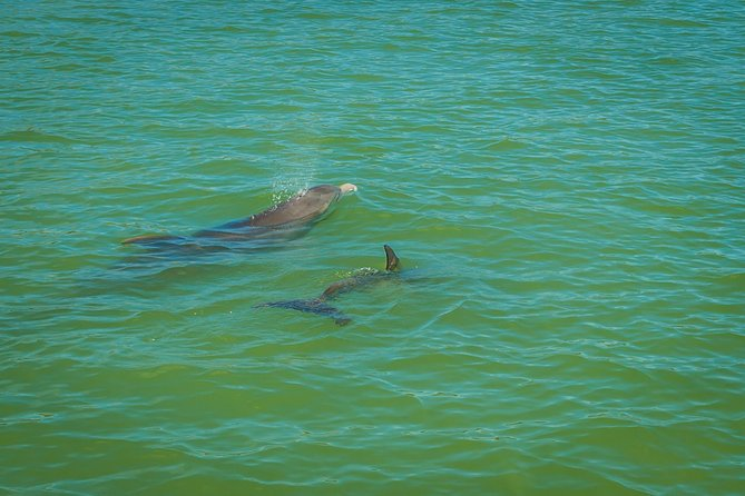 Marco Island Dolphin-Watching Tour photo 2