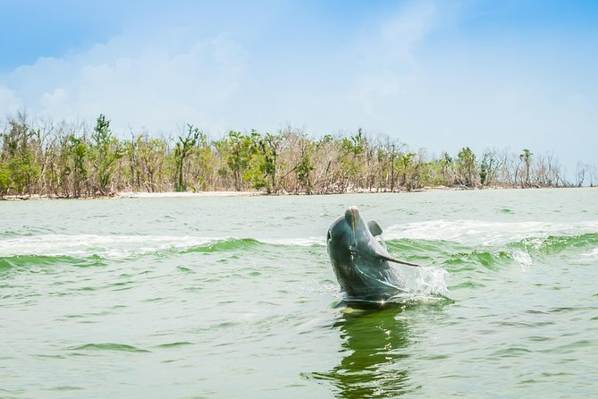 Marco Island Dolphin-Watching Tour photo 6
