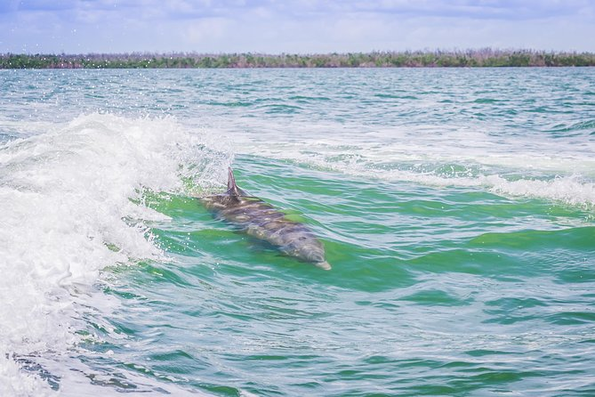 Marco Island Dolphin-Watching Tour photo 4