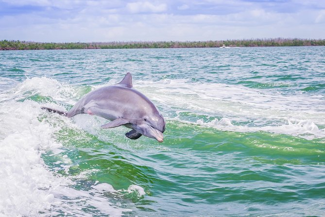 Marco Island Dolphin-Watching Tour photo 8