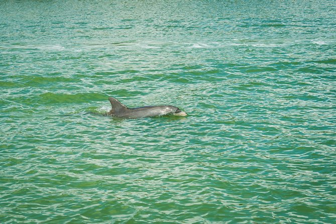 Marco Island Dolphin-Watching Tour photo 3
