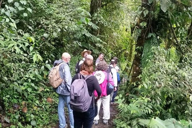 Full Day Birding Tour - La Paz Refuge & Hummingbird Sanctuary from Quito