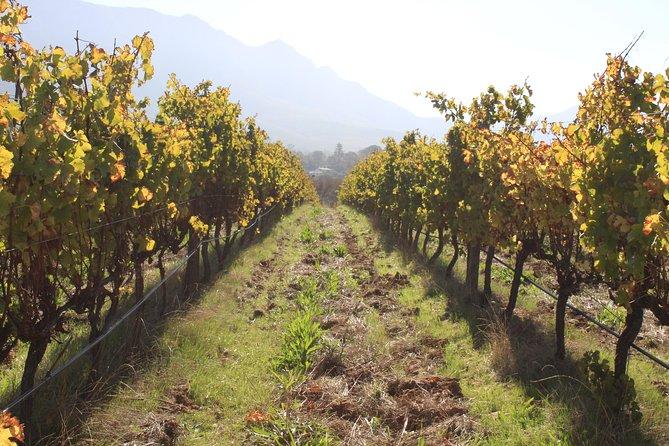 Peninsula & Wine Route Private Tour