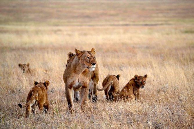6 Days Follow Wildebeest Migration