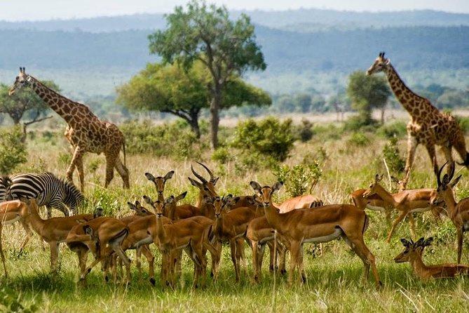 2 Days Short and Exciting Mikumi National Park Safari