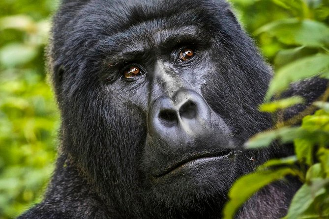 5 days gorilla & Wildlife safari in Uganda