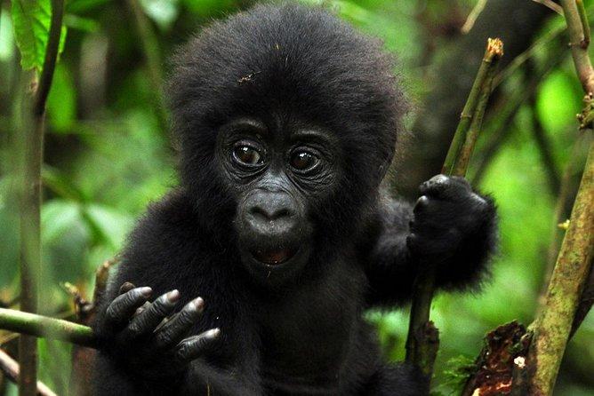 5 days gorilla & Wildlife safari in Uganda
