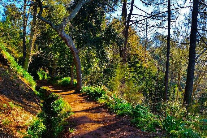 Levada Walk - Vale Paraíso