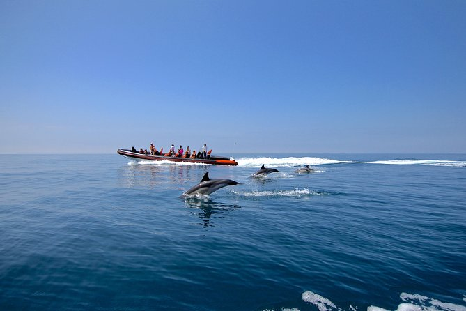 Dolphin Watching and Cave Tour from Vilamoura photo 8