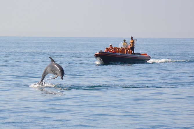 Dolphin Watching and Cave Tour from Vilamoura photo 12