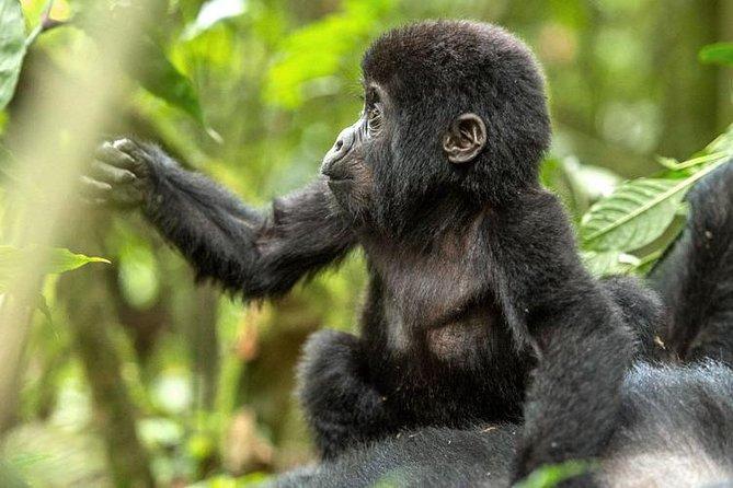 2-Day Gorilla safari tour in Rwanda