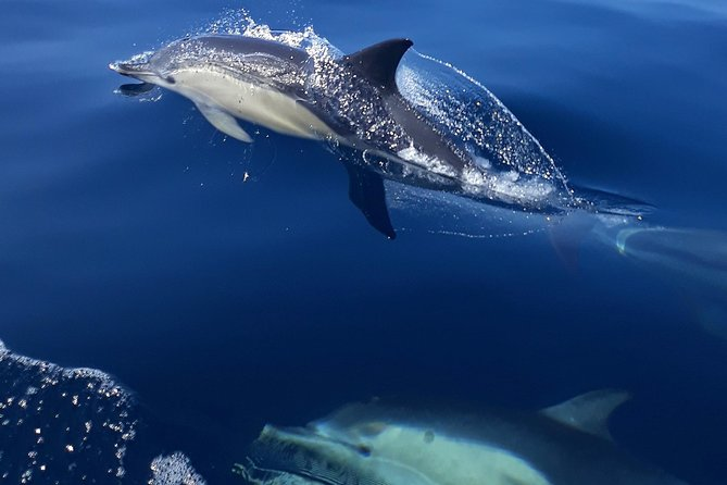 Group of Short.Beaked Dolphins cruising in Sesimbra waters