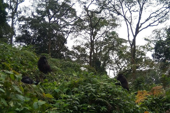 2 Days Bwindi Gorilla Safari photo 1
