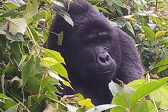 2 Days Bwindi Gorilla Safari photo 3