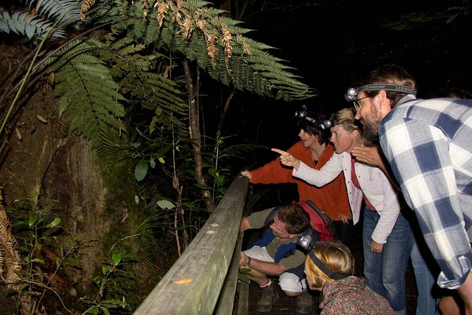 Puketi Rainforest Guided Walks .This is not a Shore Excursion product .