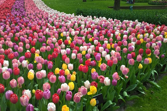 Keukenhof's Tulips and Windmills Small-Group Tour from Amsterdam With Lunch