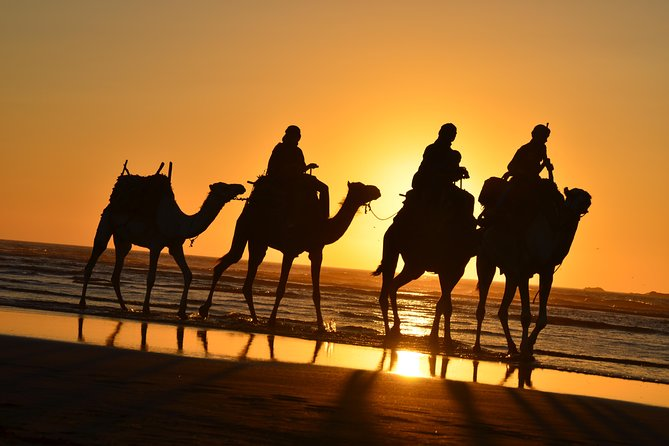 3 hours ride on camel at sunset