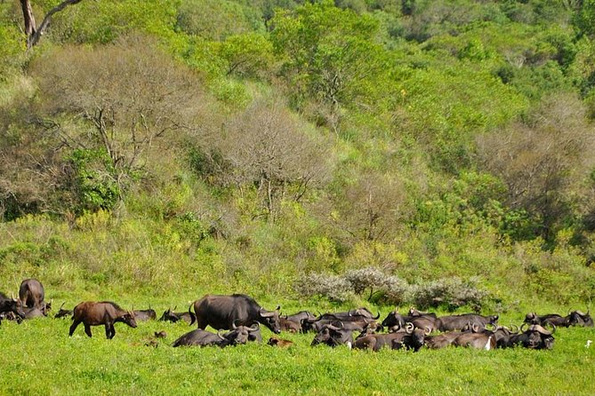 Arusha National Park Day Tour photo 4
