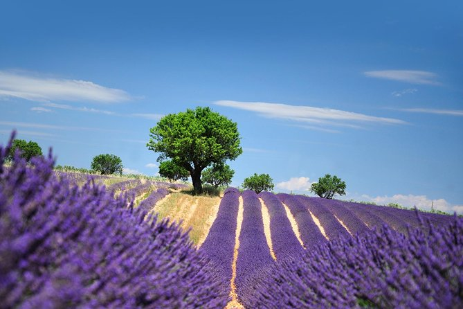 Provence Best Of