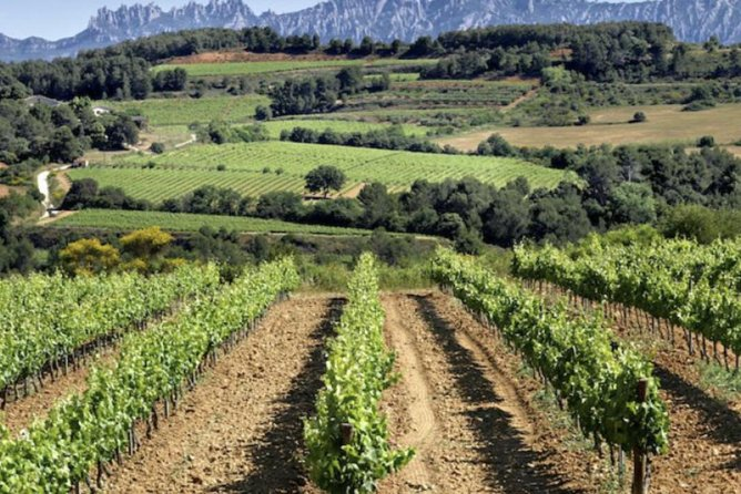 Private Best Organic Wineries Tour Plus Local Lunch from Barcelona