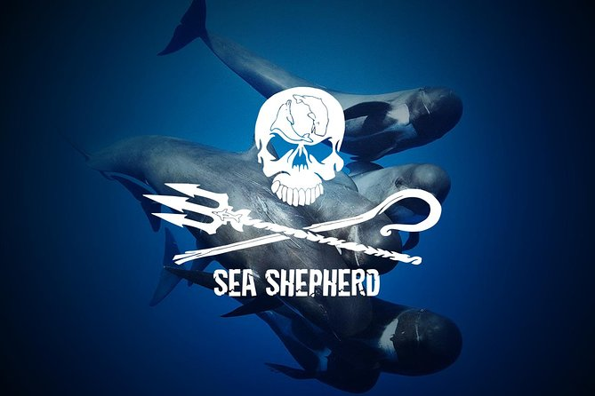 Collaborating with SEA SHEPHERD 2 hour Whale & Dolphin No Chase or Harrassment photo 2