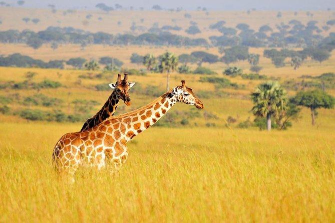 2 Days Safari to Murchison Falls National Park