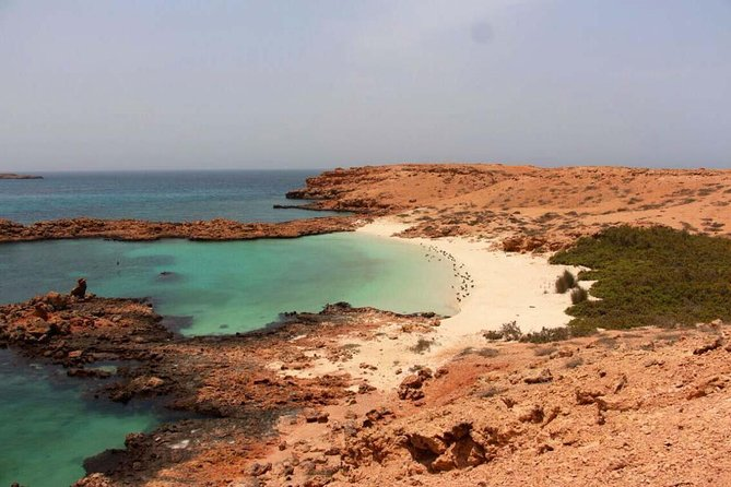 Cruises to Daymaniyat & Snorkeling