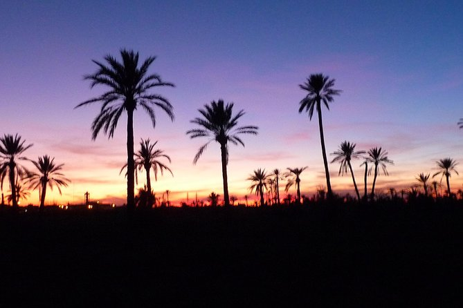 Breathtaking Sunset Camel Ride in the Palm Grove of Marrakech
